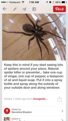 I know it's not a pet per-say; BUT Just in case: Natural Spider killer or preventer Cleaning Solutions, Cleaning Hacks, Pest Solutions, Natural Solutions, Cleaning Recipes, Diy Hacks, Cleaning Supplies, Handy Gadgets, Do It Yourself Camper