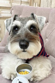 Schnauzer Grooming, Mini Schnauzer Puppies, Standard Schnauzer, Boxer Puppies, Cute Dogs And Puppies, Miniature Schnauzer, Chihuahua Dogs, Baby Dogs, Dog Grooming