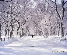 In winter, freshly fallen snow transforms the Mall in Central Park, also known as the Poet's Walk, into a wonderful spectacle.