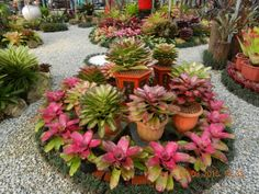 Front Yard Landscaping Awesome 50 Brilliant Front Yard Landscaping With Bromeliads Ideas. - Front yard landscape plans are no mystery but if you are one of those people who have started out for […] Lawn And Landscape, Garden Landscape Design, Landscape Plans, Succulent Landscaping, Front Yard Landscaping, Succulents Garden, Landscaping Ideas, Backyard Ideas, Flower Bed Designs