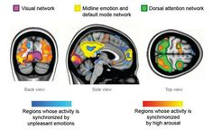 Synchronized Brains: Feeling Strong Emotions Makes People's Brains 'Tick Together' and facilitates social interaction. Science Articles, Science News, Science And Technology, Social Science Project, Brain Activities, Human Behavior, Human Emotions, Health Diet, Psychology
