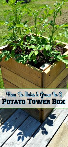 Gardening in a small space? Grow lots of potatoes in a potato tower! I will show you how to make as &; Gardening in a small space? Grow lots of potatoes in a potato tower! I will show you how to make […] potatoes