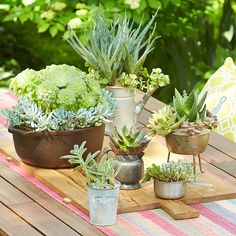 These water-thrifty, low-maintenance plants come in many sizes, shapes, and colors. Plant them in miscellaneous containers or as a low-maintenance centerpiece. Cacti And Succulents, Planting Succulents, Succulent Planters, Amazing Gardens, Beautiful Gardens, Low Maintenance Plants, Cactus Y Suculentas, Growing Herbs, Art Of Living