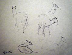 Vicuna at Edinburgh Zoo Sketchbook Drawings, Sketches, Zoo Drawing, Observational Drawing, Edinburgh, Animation, Artwork, Blog, Animales