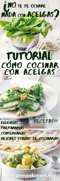 Tutorial: cómo cocinar con acelgas - elegir, almacenar, preparar y recetas de ejemplo #vegan