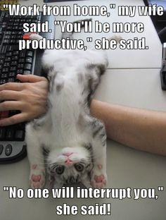 20 Funny Animal Memes That Will Make You Lol Appreciate funny pet memes that consist of pet cat memes, your favorite pet dog memes, amusing squirrel memes, cute bear memes as well as a lot extra that will make you laugh! Humor Animal, Funny Animal Jokes, Funny Cat Memes, Funny Kittens, Hilarious, Adorable Kittens, Funny Humor, Best Cat Memes, Cat And Dog Memes