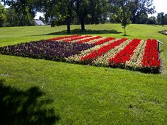 LOVE IT American flag of begonia stripes an ageratum field of