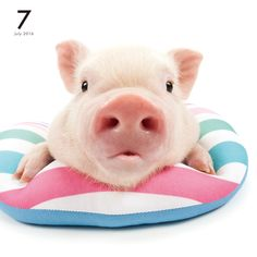 THE PIG | OTHER | Artlist Collection CALENDAR 2016