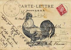 Vintage french postcard with rooster home decor  illustration collage art print