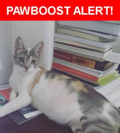 Is this your lost pet? Found in Barra da Tijuca, RJ 22631. Please spread the word so we can find the owner!  a  Nearest Address: Avenida das Américas - Barra da Tijuca, Rio de Janeiro - RJ, Brasil