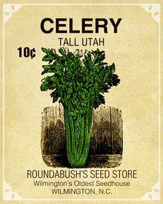 Google Image Result for http://www.pixelscrapper.com/sites/default/files/assets/user-1/node-1074/image/marisa-lerin-celery-seed-packet-asset-garden-seeds-vegetables-embellishment-ephemera-commercial-use.jpg