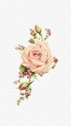 Paper Rose Antique Flower Vintage clothing - vintage flowers Flower Images, Flower Pictures, Pink Rose Png, Flower Border Png, Textile Pattern Design, Skulls And Roses, Vintage Flowers, Pink Flowers, Botanical Drawings