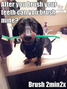 After you brush your teeth can you brush mine?