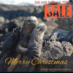 Get these unique and adorable Christmas cards, featuring marine iguanas hugging. Photos not seen anywhere else. Marine Iguana, Family Christmas Cards, Galapagos Islands, Ecuador, Travel Destinations, Cruise, Exotic, Photo Gifts, Gift Ideas