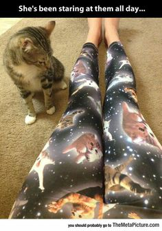 Cat legging ~ Purr World