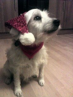 Lizzie says Ho Ho Ho Merry Christmas!! she likes to show her good side to camera! #PetPinUp #PetRunway