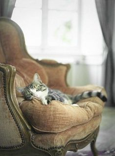 Brilliant > Beautiful Cats Photo Gallery #get