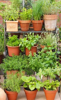 Love this herb garden in terracotta pots, fab Italianate style. Ideal for gardening in a small space