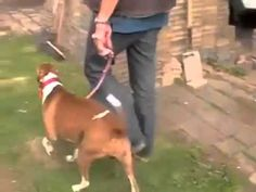 How to Train Your Dog to Stop Pulling on the Leash! Dog Training Videos, Training Your Dog, Animal Facts, How To Train Your, Dog Behavior, Your Pet, Dogs And Puppies, Pet Supplies, Dog Cat