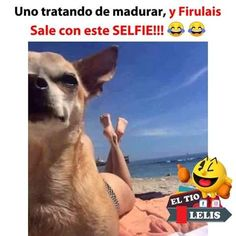 Funny Spanish Memes, Spanish Humor, Stupid Funny Memes, Hilarious, Funny Animals, Cute Animals, Kpop Memes, Pinterest Memes, Clean Memes
