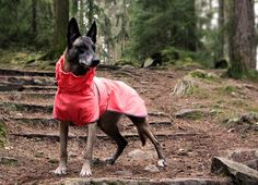 Rukka Thermal Softshell on sporttinen ja lämmin softshell takki koiralle. / Rukka Thermal Softshell is a sporty jacket that keeps your dog warm.