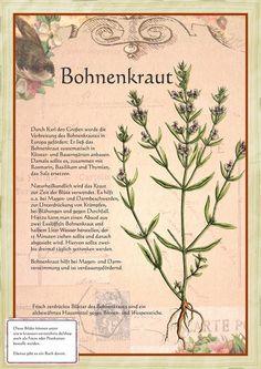 Bohnenkraut http://www.kraeuter-verzeichnis.de/