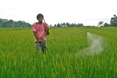 Sri Lanka Bans Monsanto Herbicide Citing Deadly Link To Kidney Disease - Banoosh