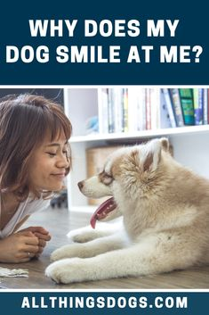There is still a lot of debate as to why does my dog smile at me. A dog is able to correlate smiling with happiness, learning from humans, and therefore, when your dog is smiling at you, he is smiling to please you and make you feel warm inside. Do Dogs Smile, Smiling Dogs, Dog Emotions, Husky Breeds, Operant Conditioning, Dog Body Language, Living With Dogs, War Dogs, Improve Mental Health