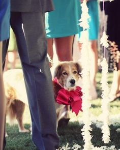 "See the ""Man's Best Friend"" in our  gallery couple had their dog Harrison at their wedding- I wish my boy was with us."