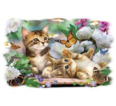Round diy diamond painting cross stitch cats diamond embroidery flowers picture rhinestone pastel diamond art craft home decor Kittens Playing, Cats And Kittens, Butterfly Canvas, Image Chat, Mosaic Animals, Cross Paintings, Flower Pictures, 3d Pictures, Photos