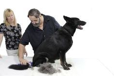The DeSheddinator – Pet Grooming – Cats and Dogs – de Shedding Tool « DogSiteWorld.com – DogSiteWorld-Store