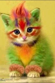 Magnus as a cat