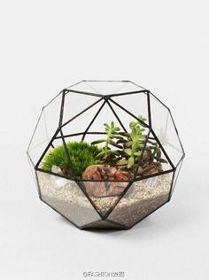 玻璃容器入的多肉植物