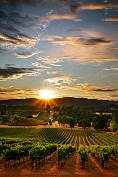 How Organic Wines trump Conventional