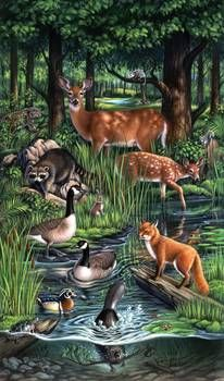 Purchase prints from Jerry LoFaro. All Jerry LoFaro prints are ready to ship within 3 - 4 business days and include a money-back guarantee. Woodland Creatures, Woodland Animals, Forest Animals, Woodland Art, Animal Facts, Wildlife Art, Wild Life, Nature Wallpaper, Adult Coloring Pages