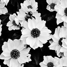 Flowers Black and White Photograph Fine Art by sarahaphotography, $18.00