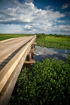 Driving across one of many rustic bridges in the Pantanal will afford amazing wildlife views. Pantanal National Park in Pocone, Mato Grosso, Brazil
