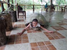 JUgando a ser Tortuga Gigante en el Parque de #Galápagos