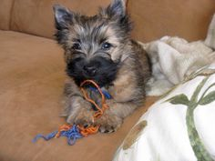 Maggie at 12 weeks. Doing her own version of knitting.