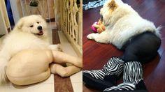 Dogs Wearing Pantyhose... omg....