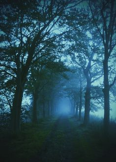 Inspiration For Landscape photography Picture Description Misty Douglas Adams, Beautiful World, Beautiful Places, Beautiful Pictures, Beautiful Landscape Photography, Beautiful Landscapes, Magic Places, Tree Tunnel, Nature Pictures