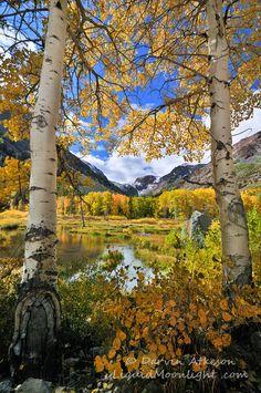 Fall in the High Sierra Nevada; photo by Darvin Atkeson