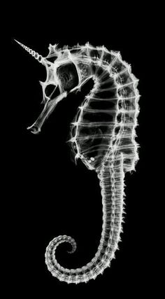 An image on imgfave...skeleton of a sea horse...with a horn. a unicorn:):)