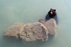 "betomad:  "" sunbathing. photo by daydreams  """