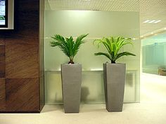 Plant display in office building in Madrid