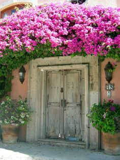 A bougainvillea enhanced door on Lazaro Cardenas in Bucerias, Mexico.