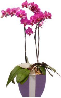 Paixão por orquídeas - Meu orquidário: Mais sobre adubação: Qual época de usar cada adubo...