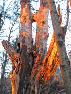Sunset on dead tree. Photo by Valerie Claff.