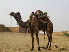 Resultados de la búsqueda de imágenes: Belenes+camellos+fotos - Yahoo Search