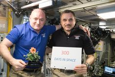 In this Jan. 21, 2016 photo made available by NASA, one-year mission crew members Scott Kelly of NASA, left, and Mikhail Kornienko of Roscosmos celebrate their 300th consecutive day in space. By spending 340 days aboard the International Space Station, the astronauts will help scientists understand what happens to the human body while in microgravity for extreme lengths of time. Kelly is holding a zinnia plant grown in space as part of the Veggie experiment on the International Space…